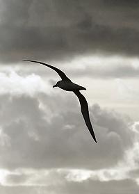 Albatros (Baudelaire, przekł. Lange)