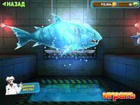 Леденая акула