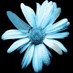 FlowerGlyph
