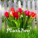 Plushboy1