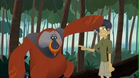 Wild Kratts - The Big Strong Orange Guy(A Huge Orange Problem)