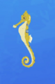 Slender Seahorse AN