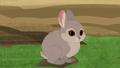 Pygmy Rabbit-1