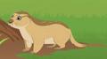 Black-tailed Prairie Dog AN