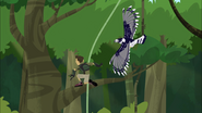 Chris and Harpy Eagle Action