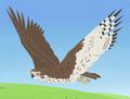 Prairie Falcon AN