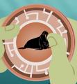 Walrus Power Disc