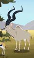Greater Kudu AM