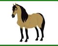 Wild Pony AM