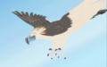 Rainforest.eagle.