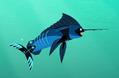 Marlin Power Suit