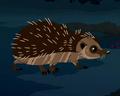 European Hedgehog AM