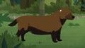 Bush Dog AM