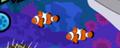 Ocellaris Clownfish Pair
