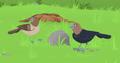 Brown-headed Cowbird AM