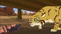 Bob cat Vs Gila Monster