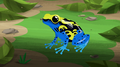 Dyeing Poison Dart Frog-0