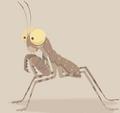 Desert Pebble Praying Mantis