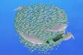 Dolphin.wildkratts.0017
