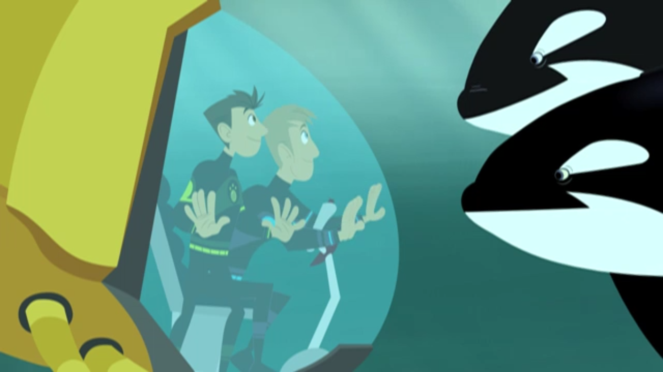 This Orca Likes Sharks