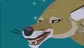 Coyote Growling