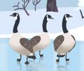 Canada Goose AN