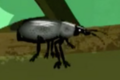 Dusky Darkling Beetle