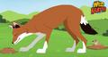 Ethiopian Wolf AM