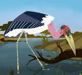 Marabou Stork AM