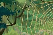 Spider.web.16