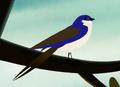 TreeSwallow.jpeg