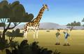 Giraffe.wk.02