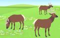Elk AN