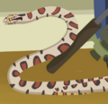 Milk Snake AM