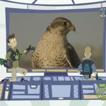 Prairie Falcon.png