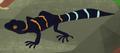 Chinese Leopard Gecko AM