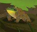 American Bullfrog AM
