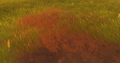 Sunset Grass Patch.png