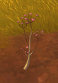 Tall Fingerflowers.png