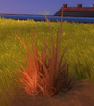 Dried Tuft of Sunset Grass.png