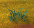 Bulrush, Grass Only (Green).png