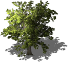 Resource Tree Linden.png
