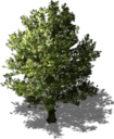 Resource Tree Maple.png