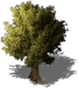 Resource Tree Oak.png