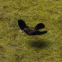Mob Raven (field).png