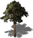 Resource Tree Pine.png