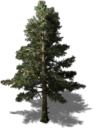 Resource Tree Whitefir.png