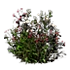 Resource Wild weeds.png