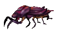 Purple Beetle.png