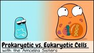 Prokaryotic vs